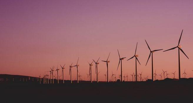 Rewilding / Subsidy free solar / IDNO / Ammonia fuel cells